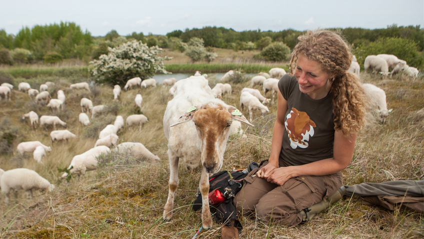 Schaapherder, herderin Daphne van Zomeren - t-shirt met schaap - Campy Kemp Sheep Shirt. Schaapskudde in de Amsterdamse Waterleidingduinen. Foto: Marc Baars
